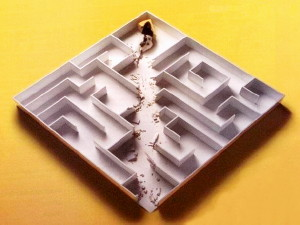 Picture of mouse in a cardboard maze. It has eaten its way through the walls directly to the cheese.